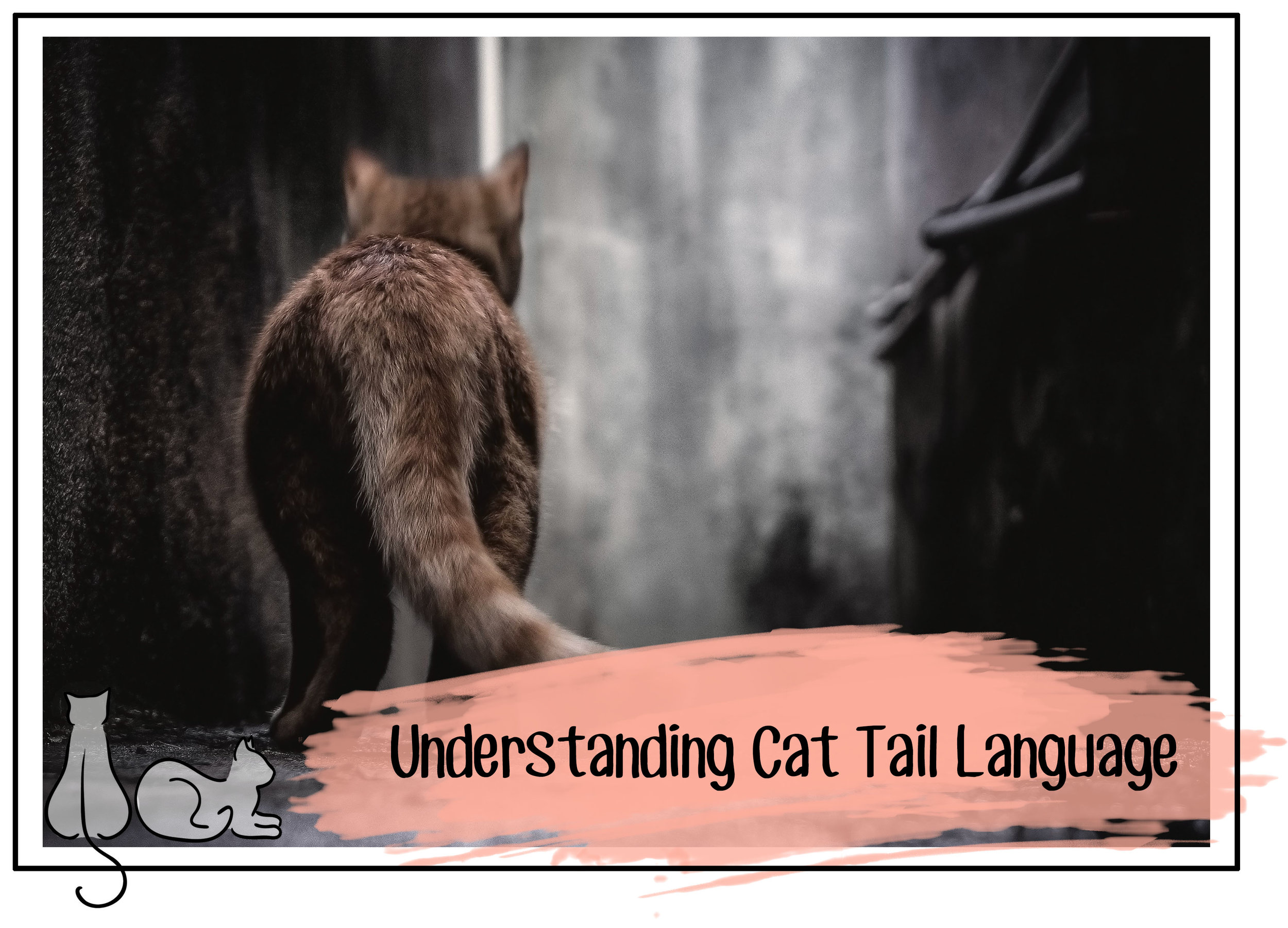 cat tail header.jpg