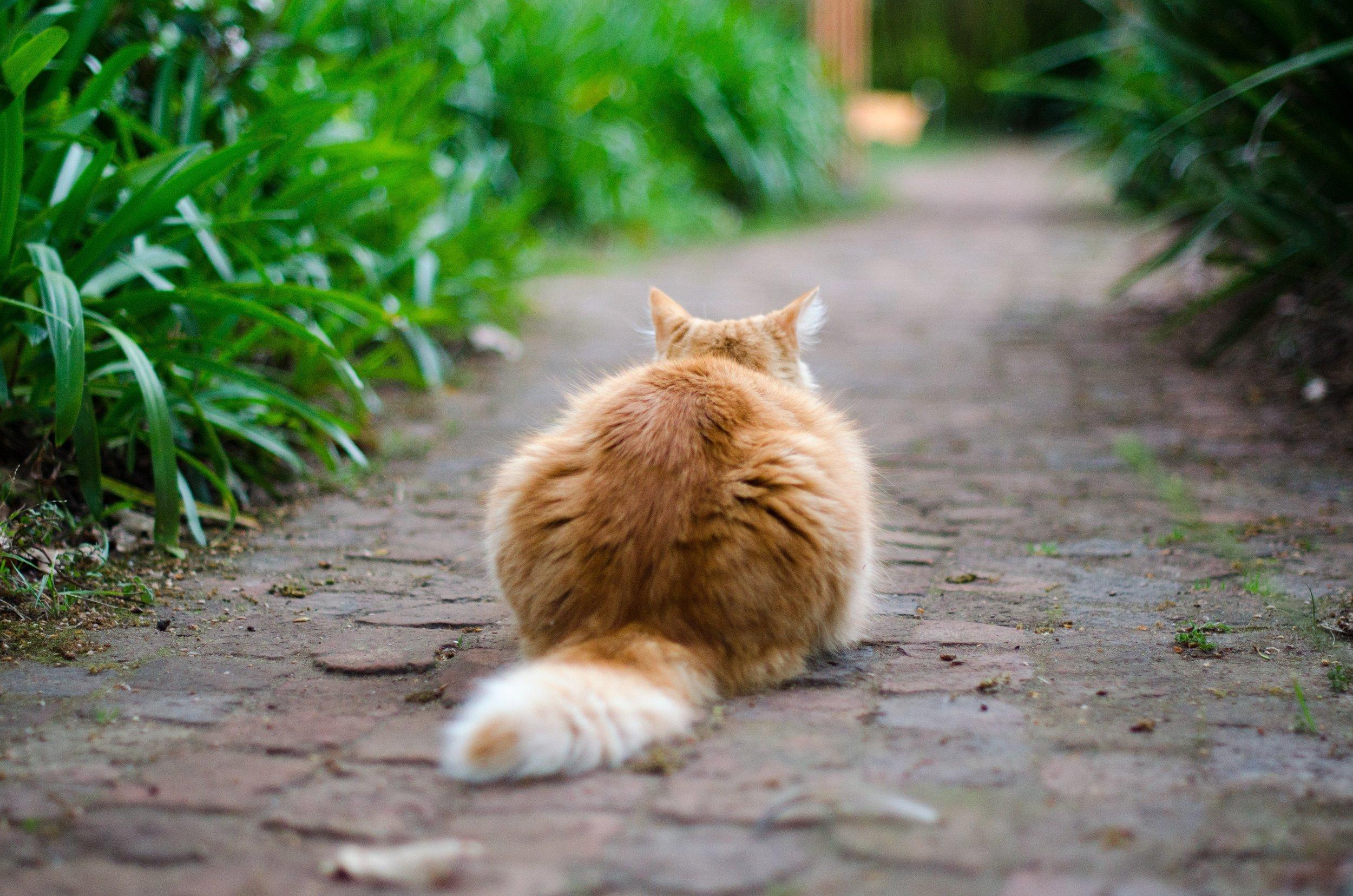 feral cats vs stray cats
