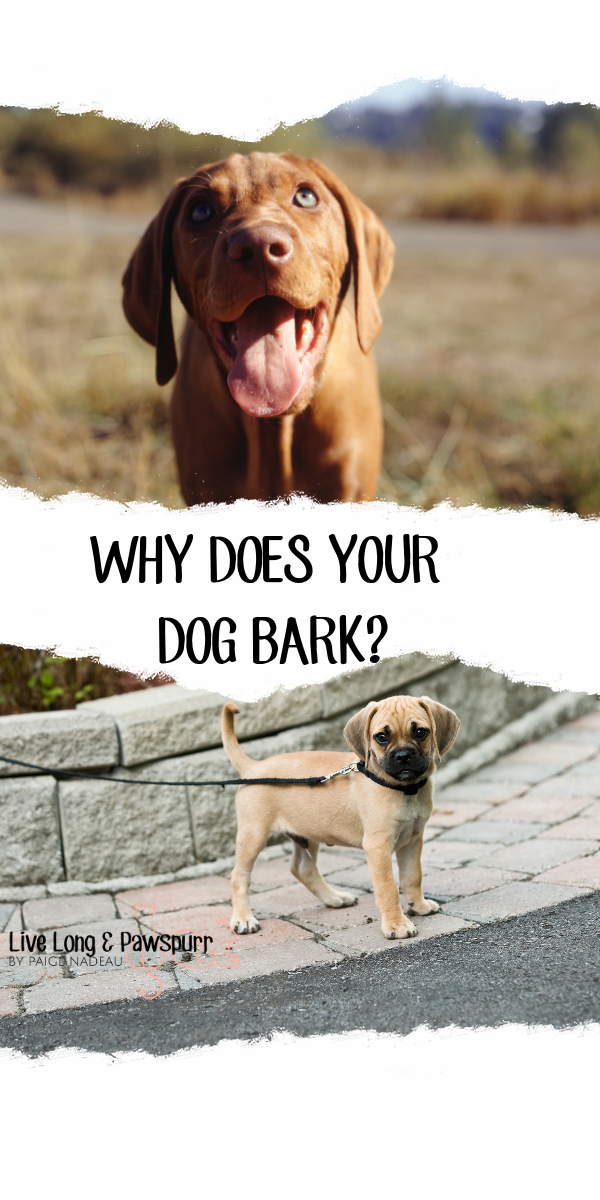 WHY DOES YOUR DOG BARK_.png