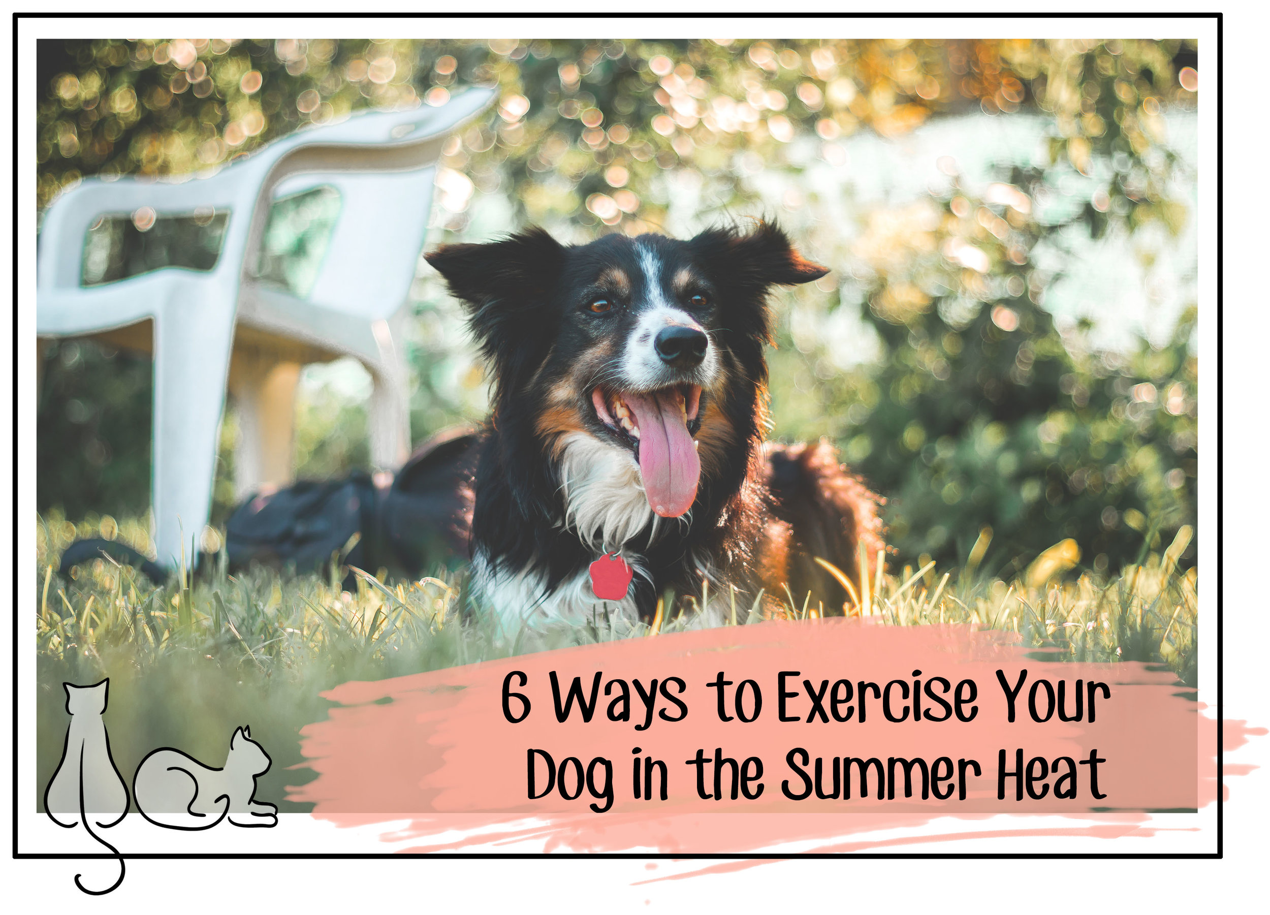exercise dog summer header.jpg