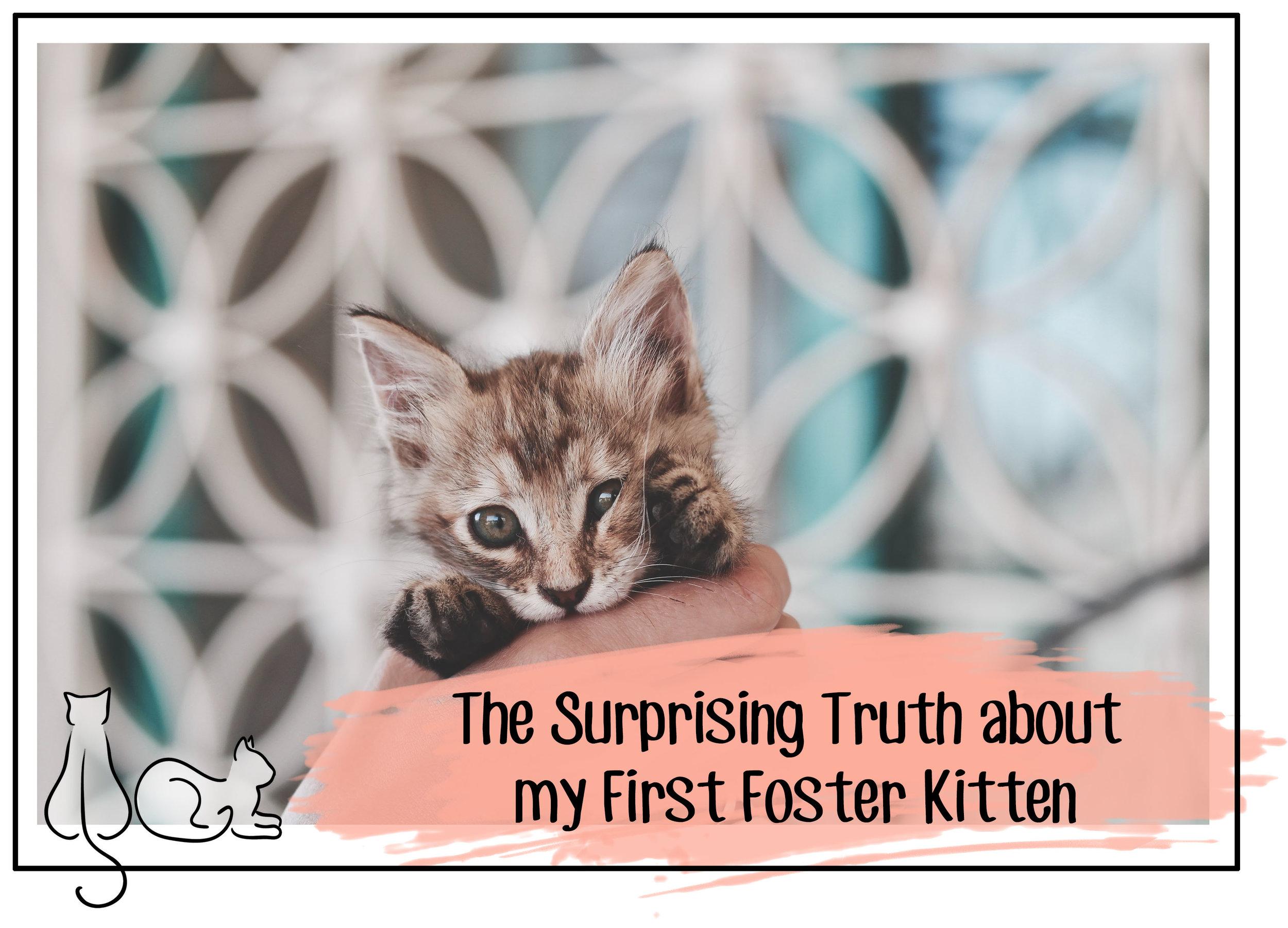 foster header.jpg