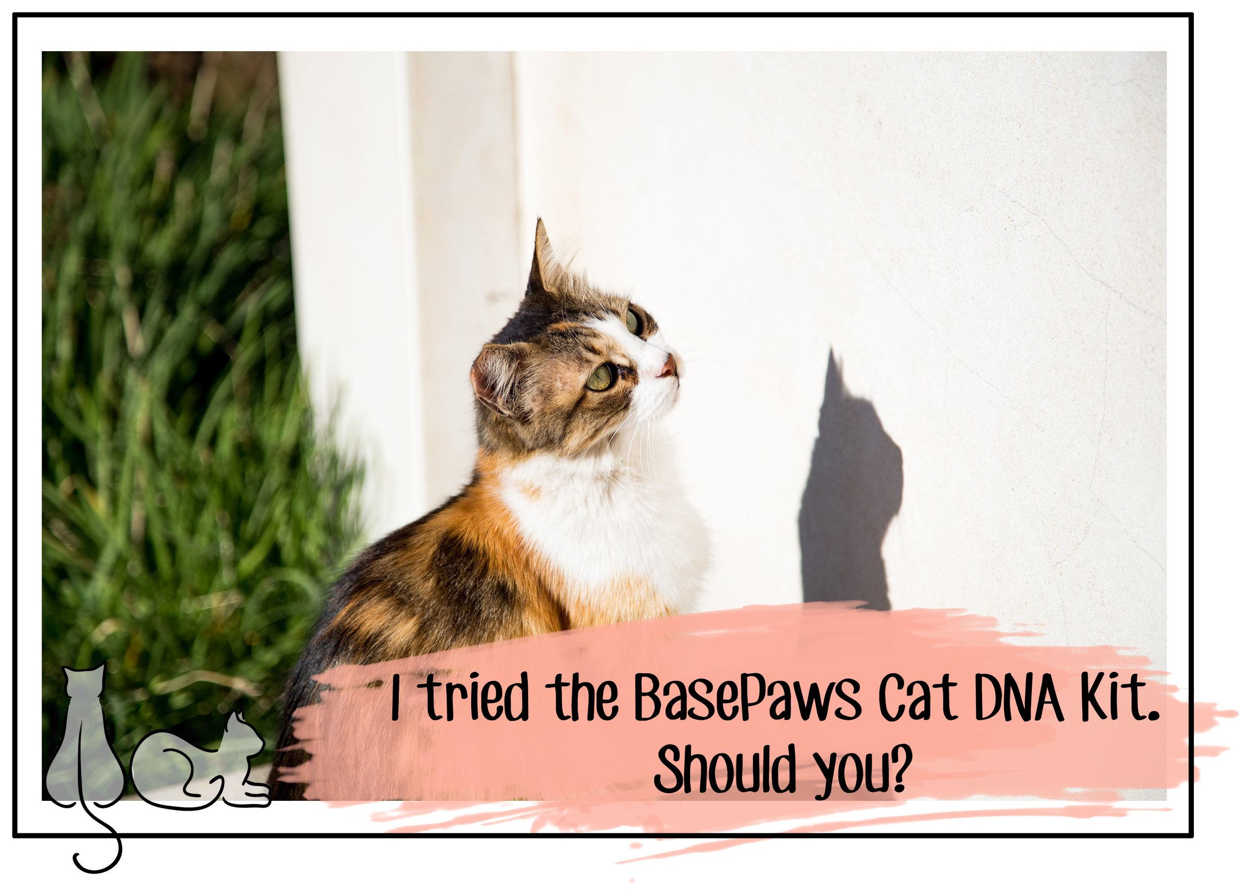 basepaws header.jpg