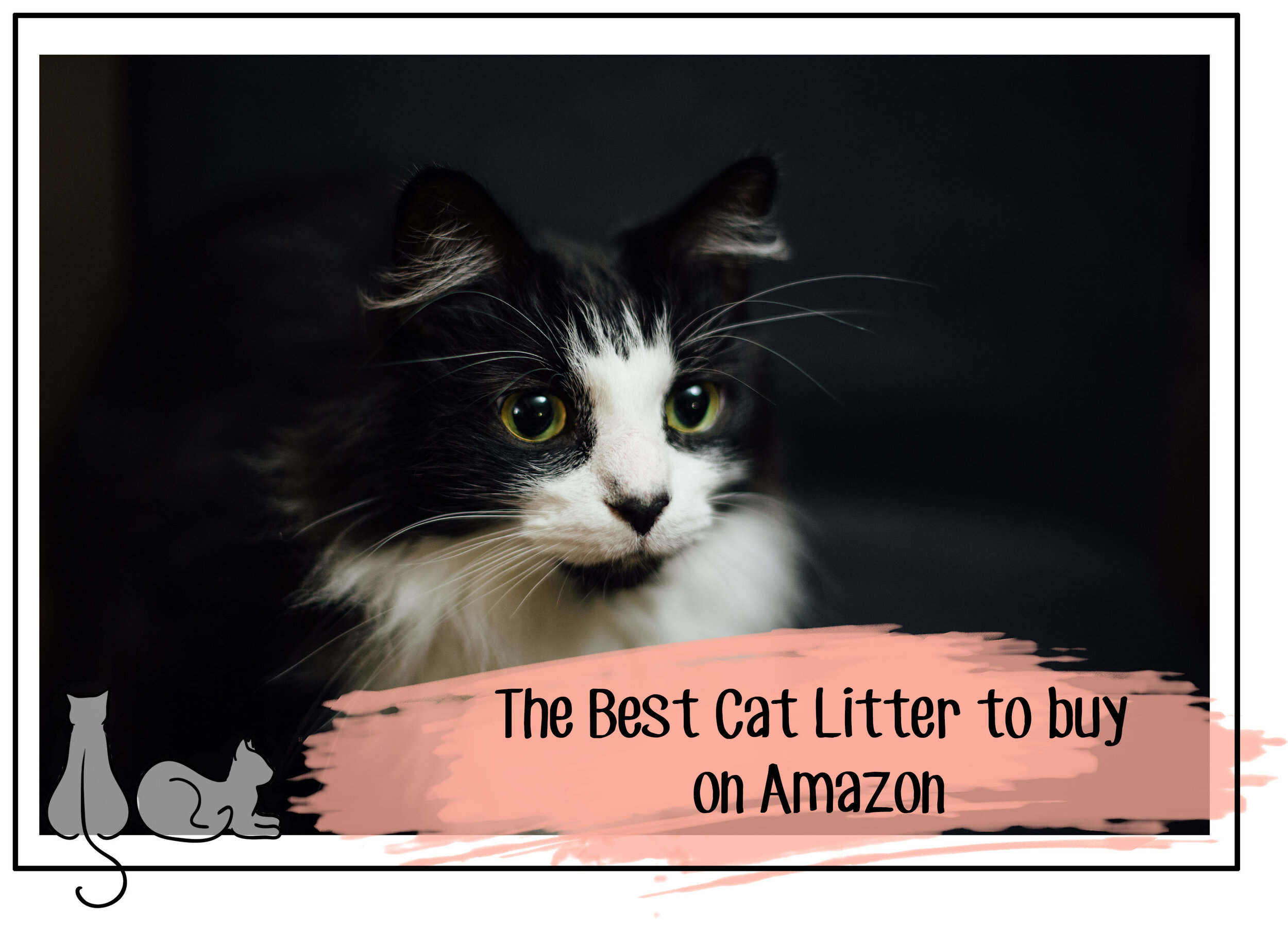 best cat litter to buy on Amazon.jpg