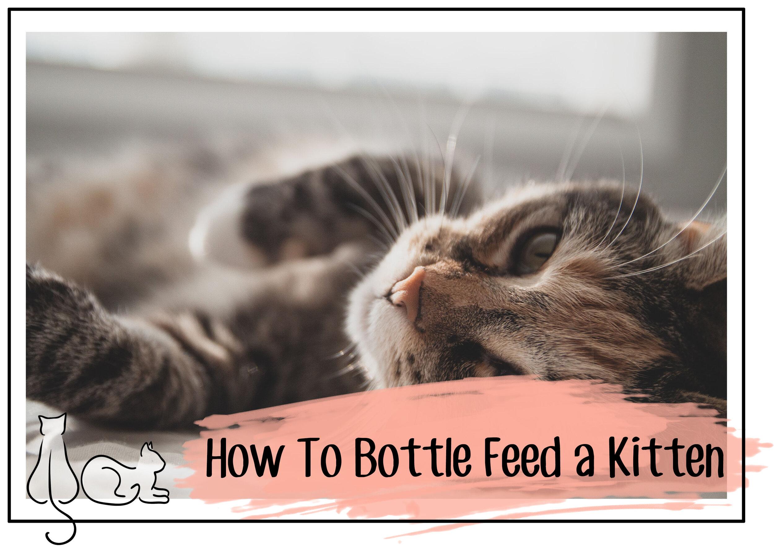 bottle feeding kittens header.jpg
