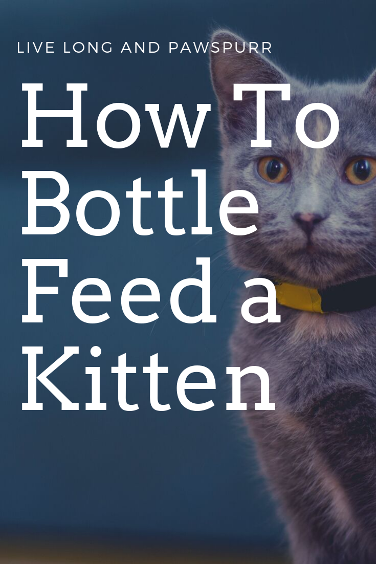 How To Bottle Feed A Kitten Live Long And Pawspurr