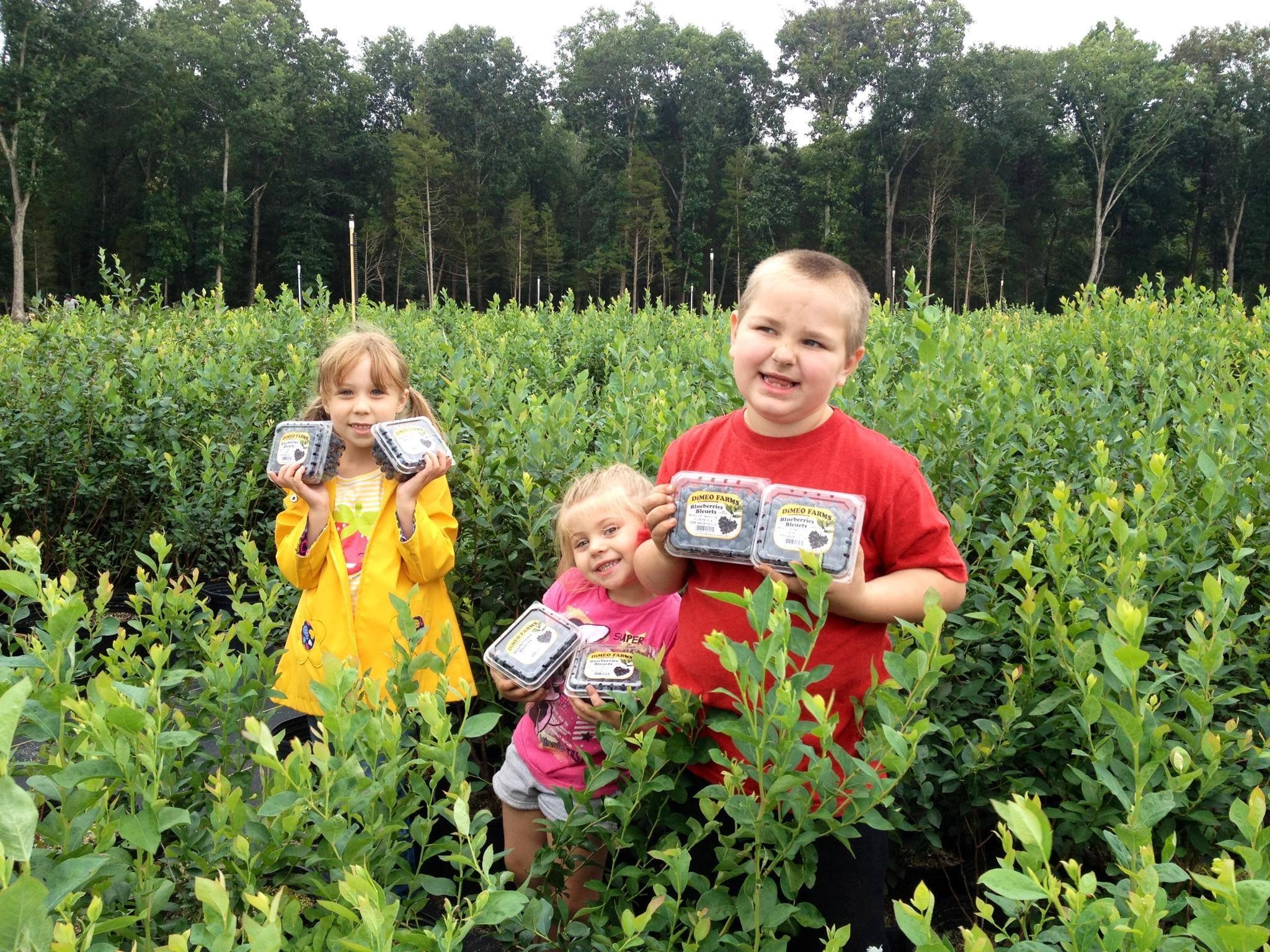 blueberry-picking-dimeo-farms-three-kids-smiliing.jpg