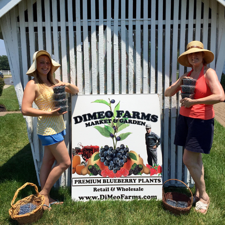 U-Pick Farms in NJ - DiMeo Blueberry Farms.JPG