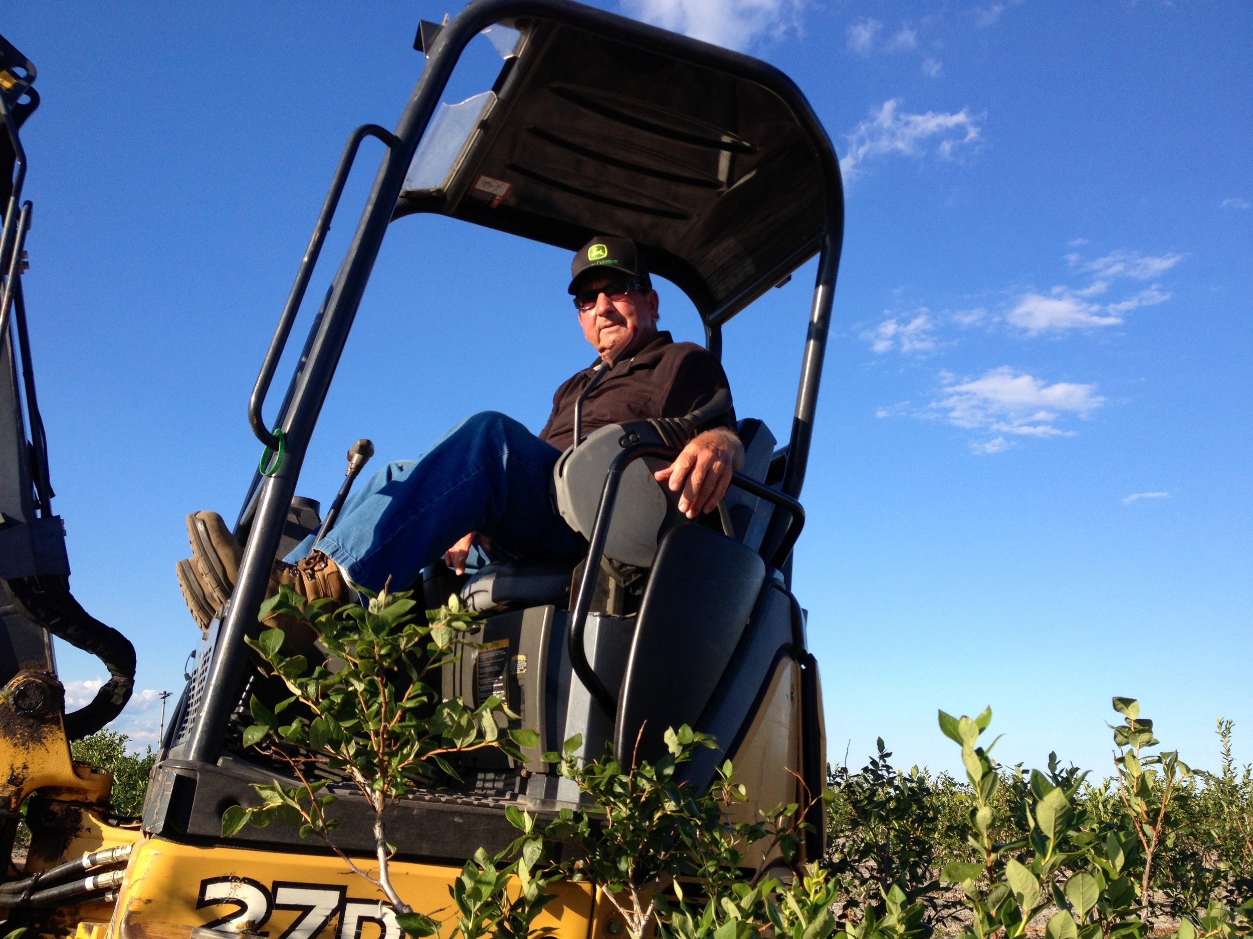 DiMeo Blueberry Farms Replanting Blueberry Bushes.jpg