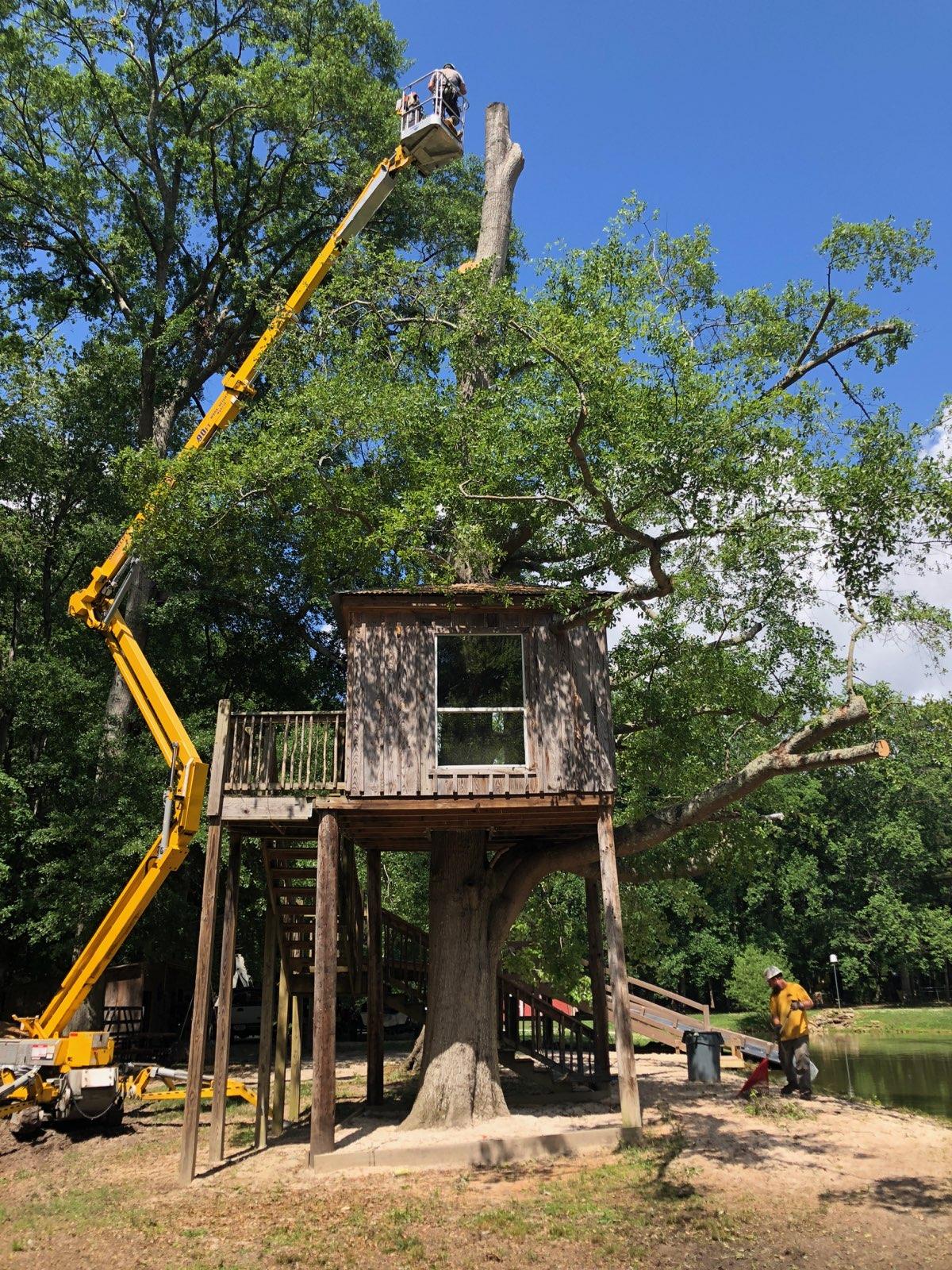 Tree Service Monroe GA