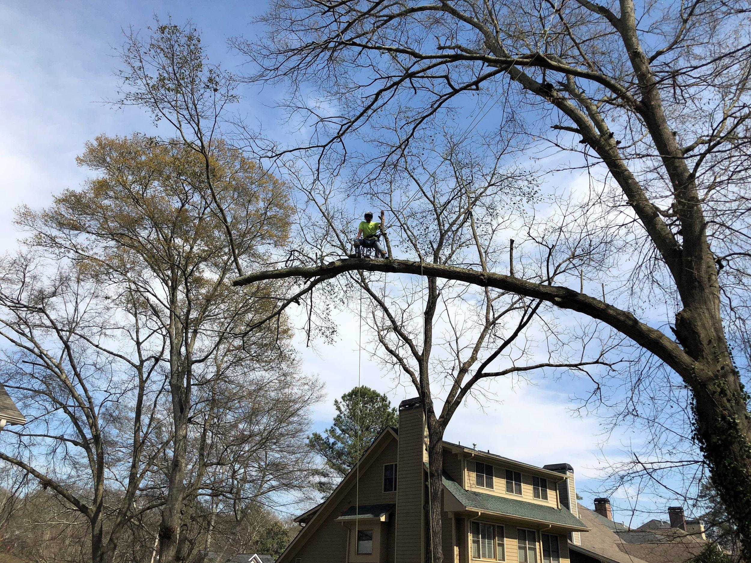 Tree Care Watkinsville GA