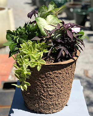 Mother's Day Container Garden