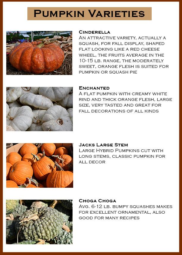 Pumpkin Flyer 1.jpg