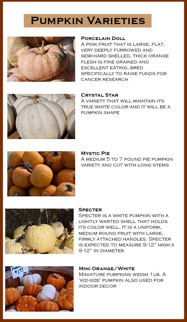 Pumpkin Flyer 2.jpg