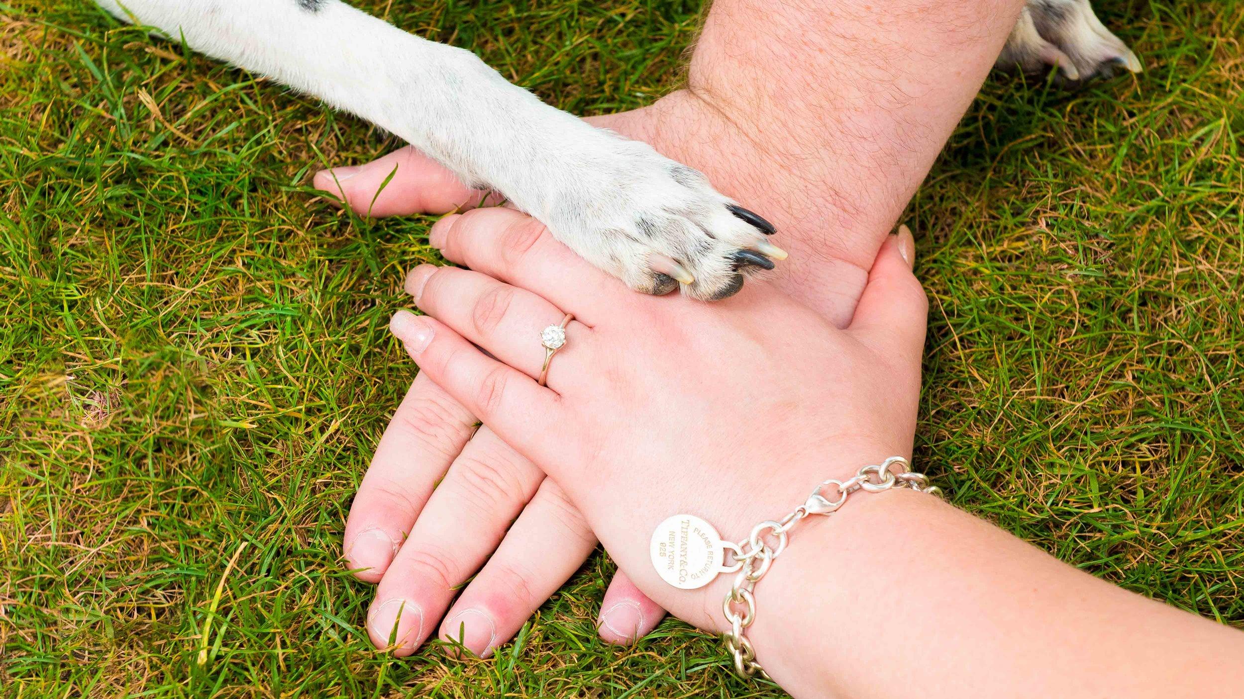 Pittsburgh-Northshore-Wedding-Engagement-Photography-16x9-10.jpg