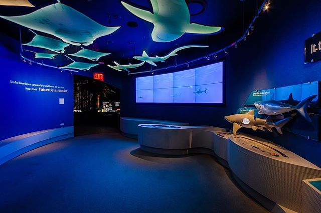 "The 'Meet the Shark' area of Ocean Wonders: Sharks! at the @nyaquarium is where the majority of the exhibit's information is presented. Each display is highlighted by a cluster of tiny LED track heads, mounted to a flexible track curved to match the organic shape of the room. The ceiling is hung with twenty-two custom ""shark pendants""  fabricated from acrylic and edgelit with cool white LED tapelight to create a unique and playful environment. 📸: @fischerlighting"