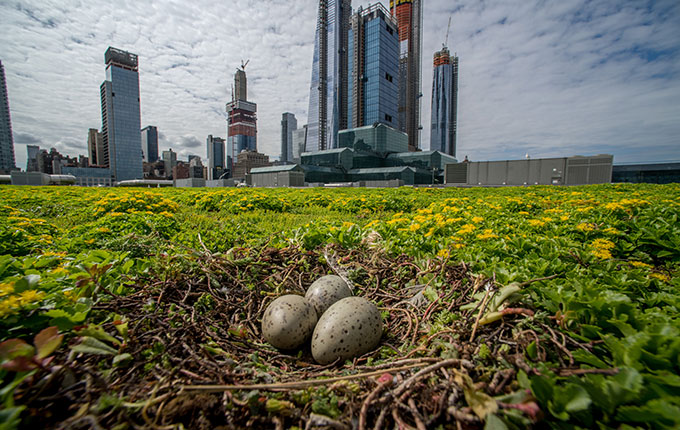 The Jacob K. Javits Center Green Roof