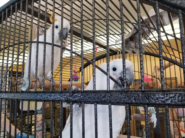 Residents of Metro Denver Parrot Rescue. Photo by Carrie Dow.