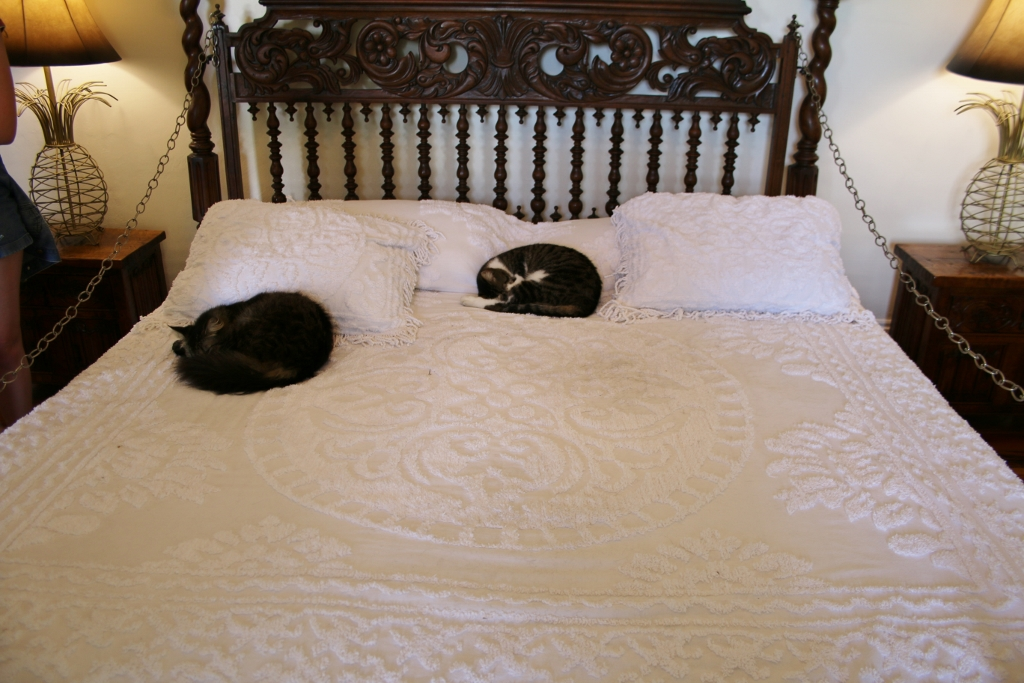 Only the cats are allowed to sleep on Hemingway's bed. Photo by Carrie Dow.