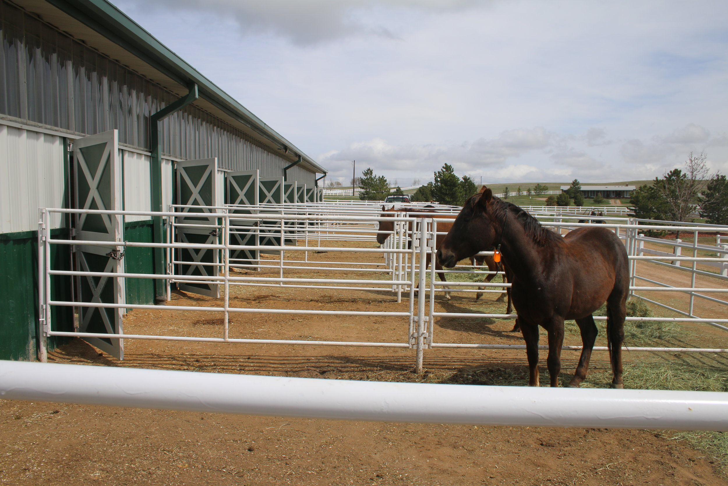 Outdoor paddocks are full at Harmony. Photo by Carrie Dow.