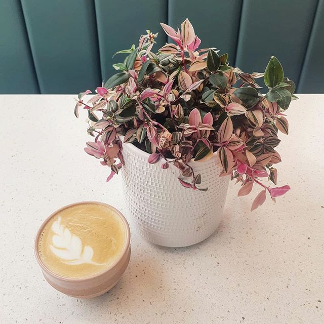 BEETROOT / MATCHA / TURMERIC     what's your caffeine free alternative choice? @ancoatscoffeeco WAREHOUSE BLEND or DECAFF always there! #stretford 📷 @isobel_s