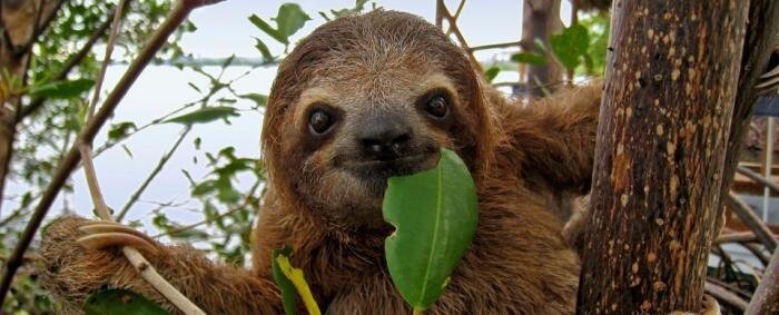 Actual image of me eating greens while watching British crime shows.