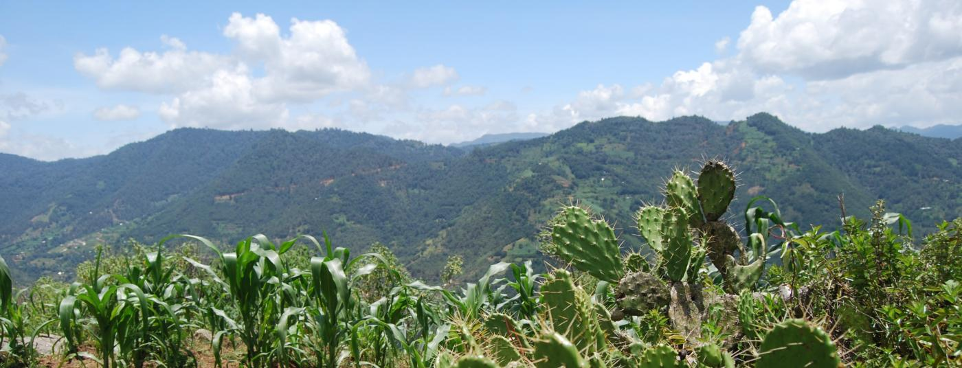 PFM Banner Cacti.jpg