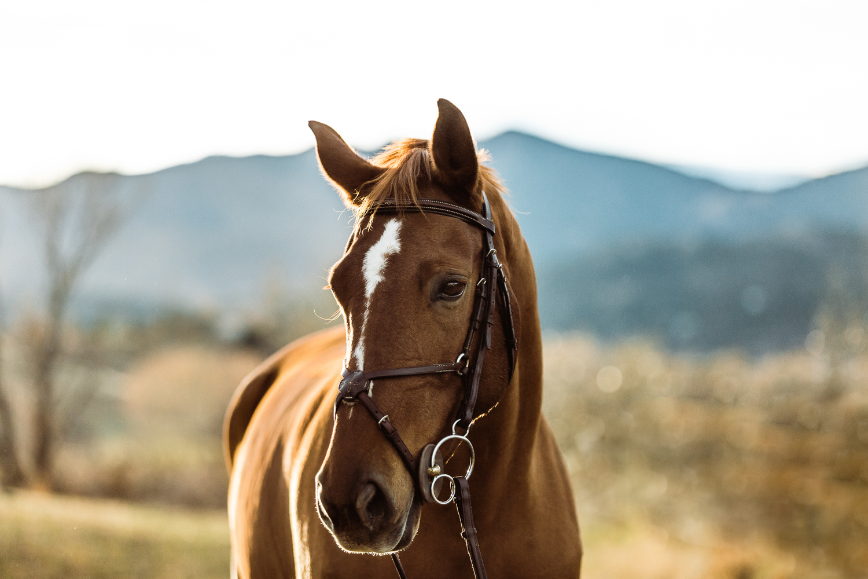 Boulder Equine Photographer_001.jpg