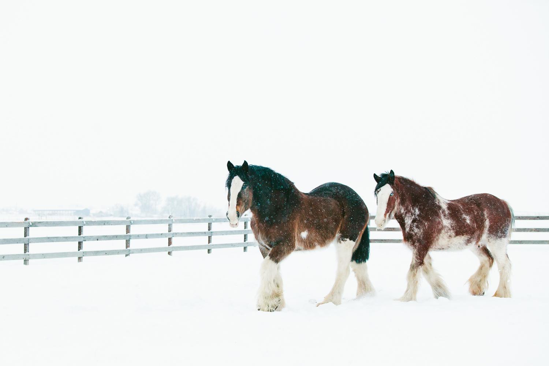 Winter Equine Photography Inspiration Boulder Denver Pet Photographer Allison Mae Photography
