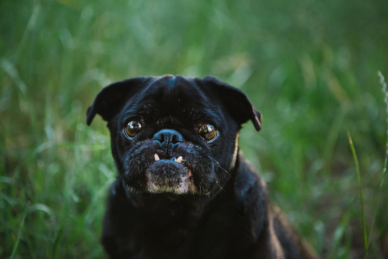 Fort Collins Pet Photographers_003.jpg