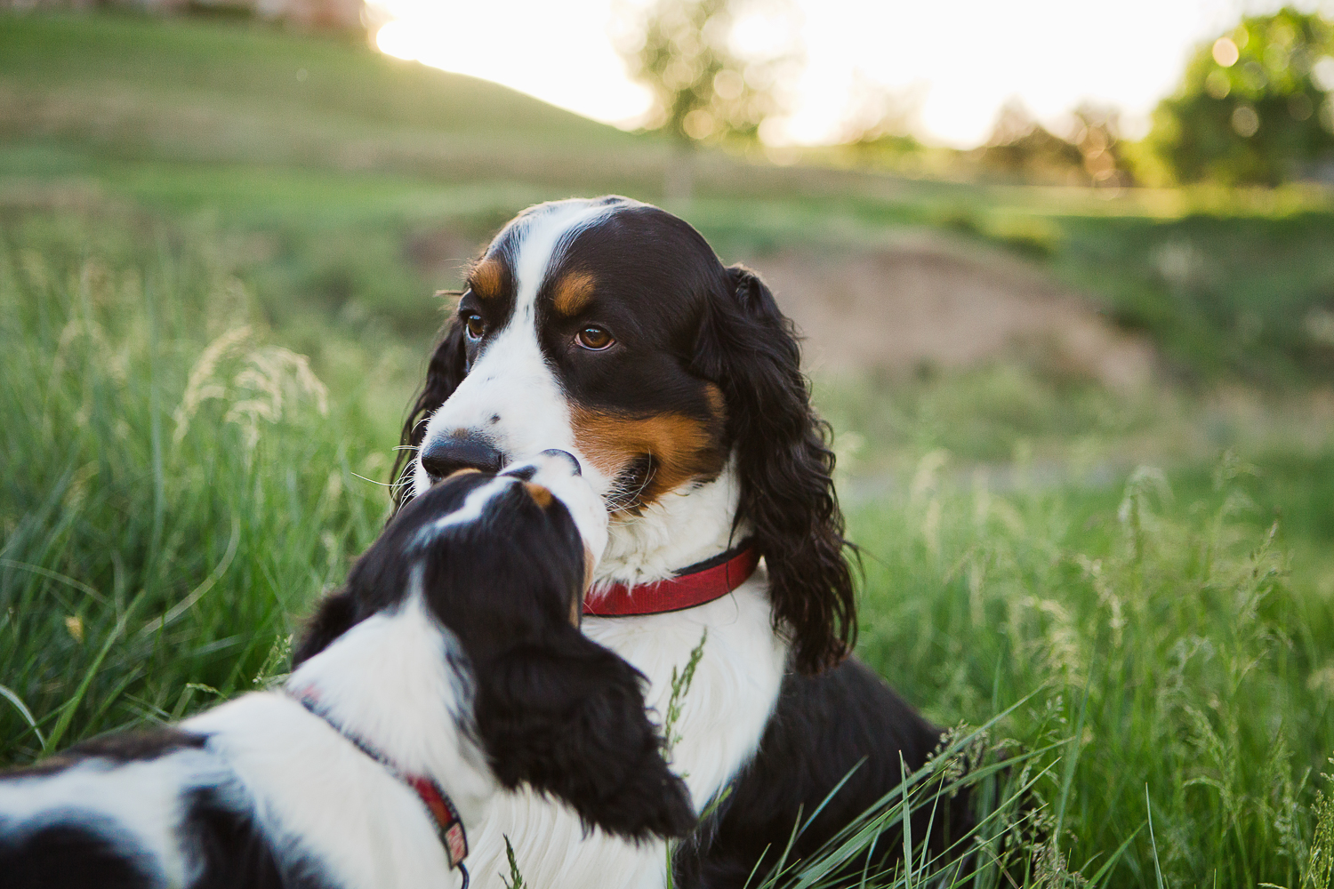 Best Denver pet photographers_035.jpg