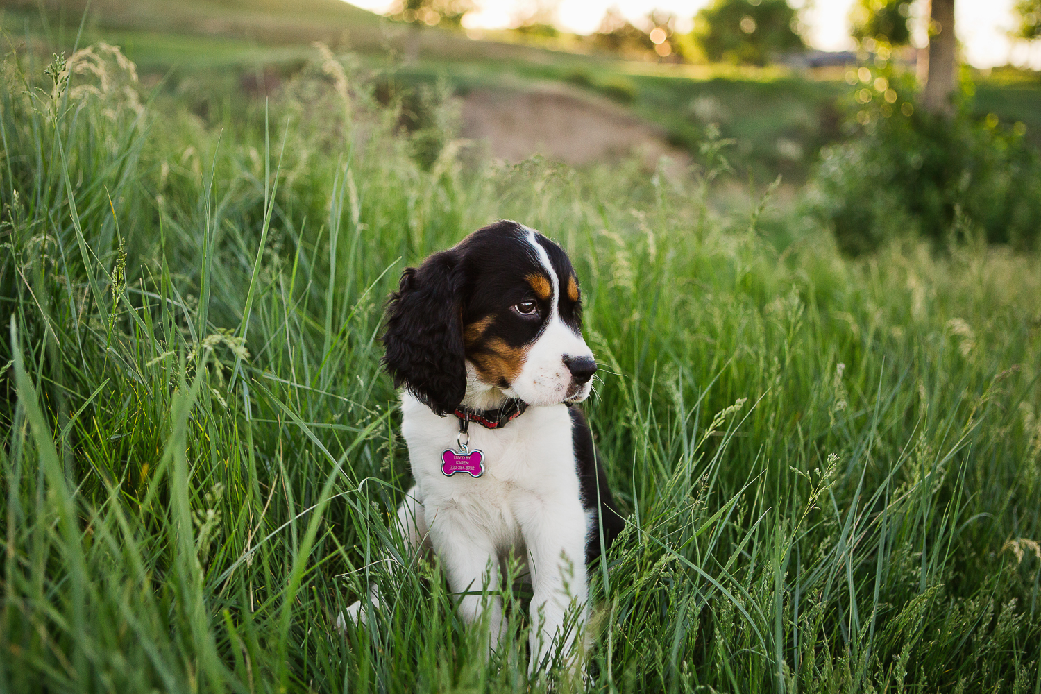 Best Denver pet photographers_037.jpg