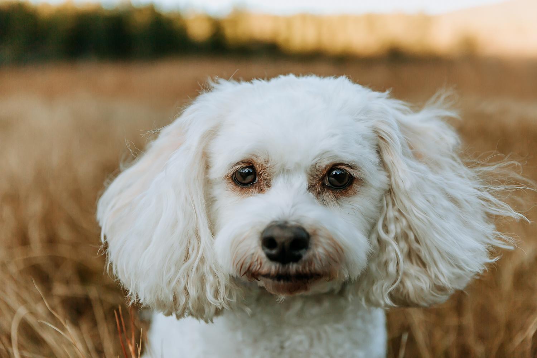 Best Boulder pet photographers_005.jpg