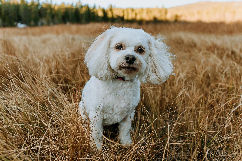 Best Boulder pet photographers_004.jpg