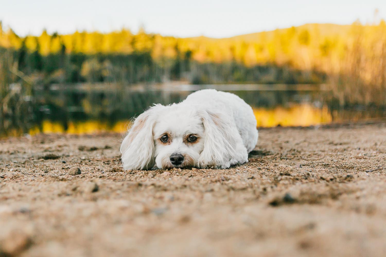 Best Boulder pet photographers_003.jpg
