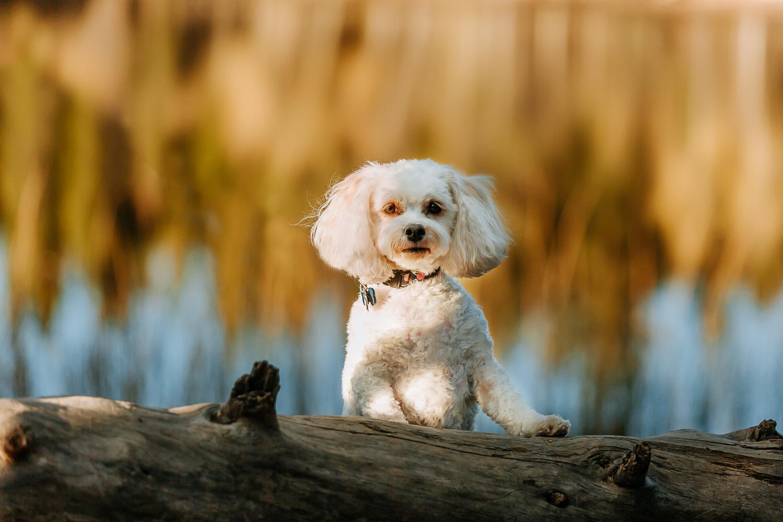 Best Boulder pet photographers_012.jpg