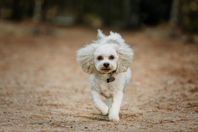 Best Boulder pet photographers_014.jpg