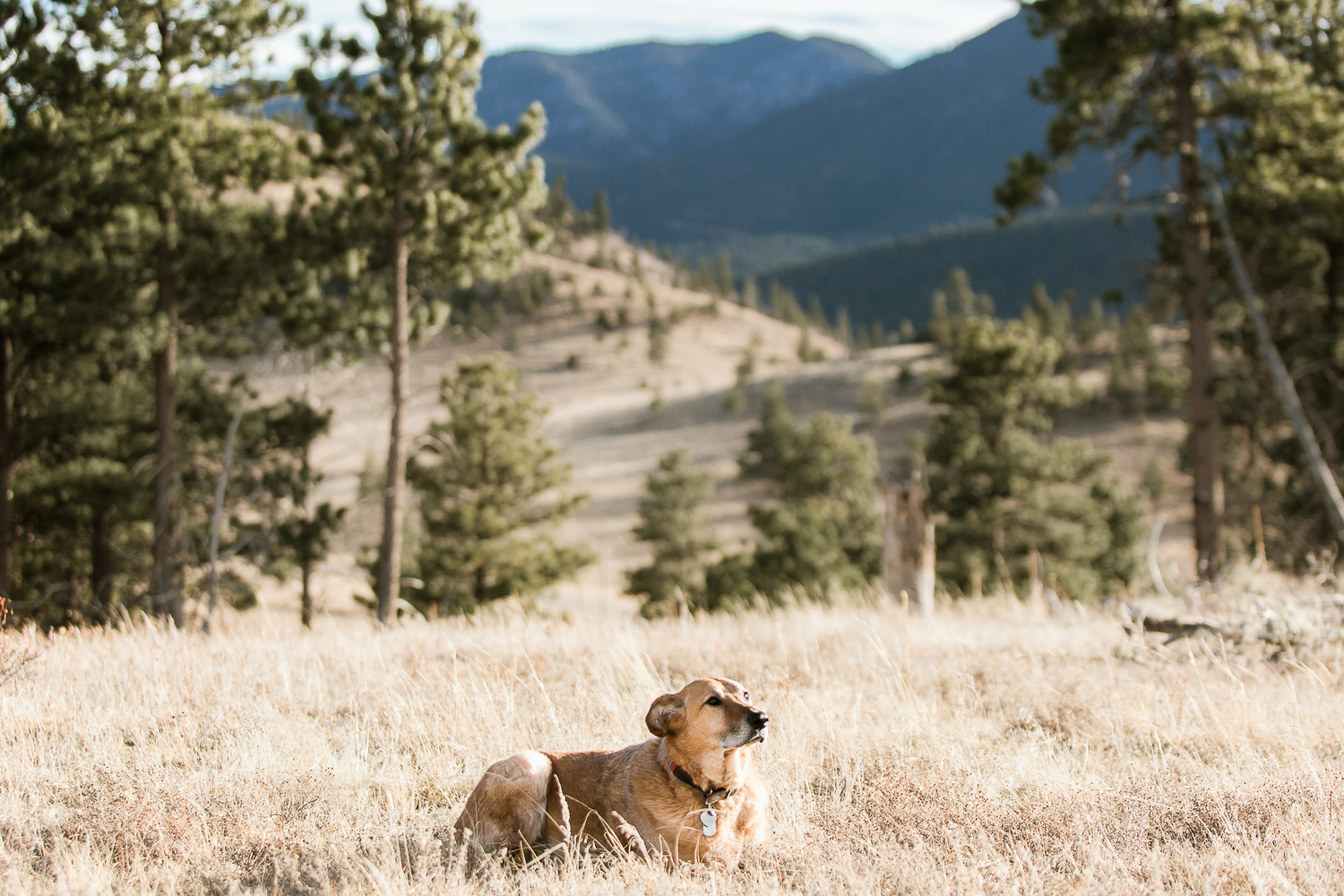 Best dog photographers in Boulder031.jpg