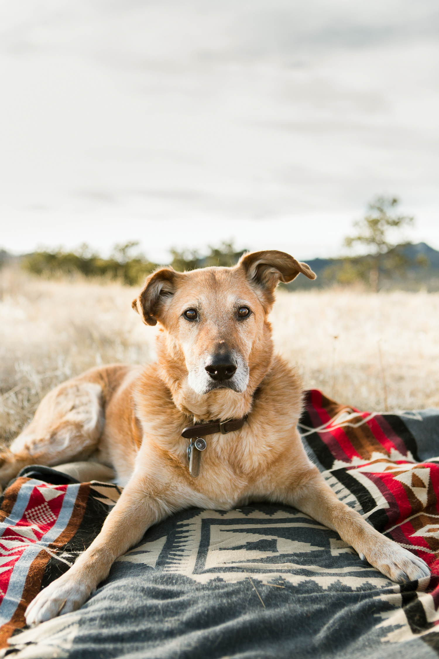 Best dog photographers in Boulder013.jpg