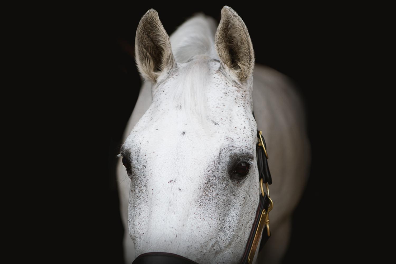 colorado sport horse photographer_003.jpg