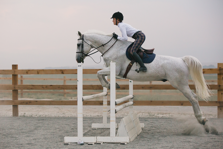 colorado sport horse photographer_010.jpg
