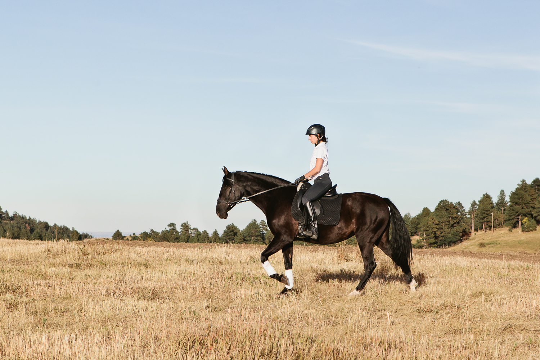 denver equine photography007.jpg