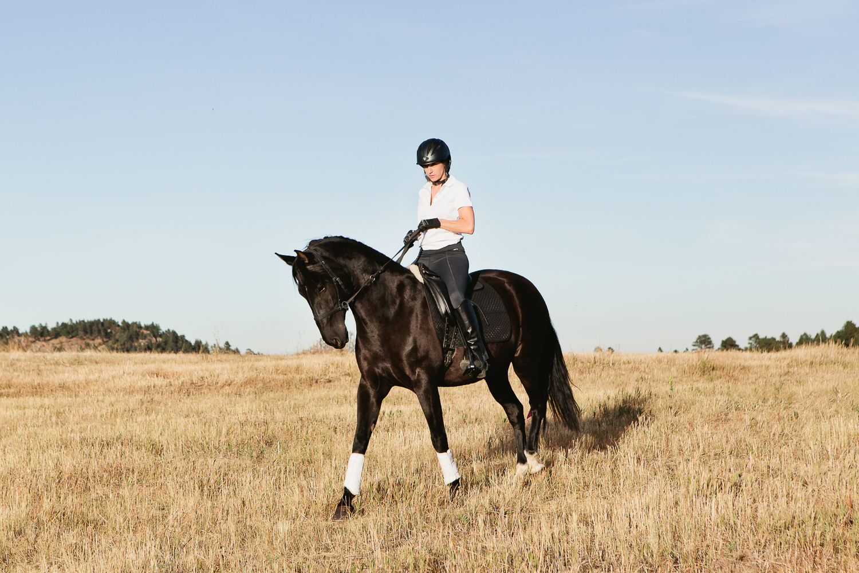 denver equine photography009.jpg