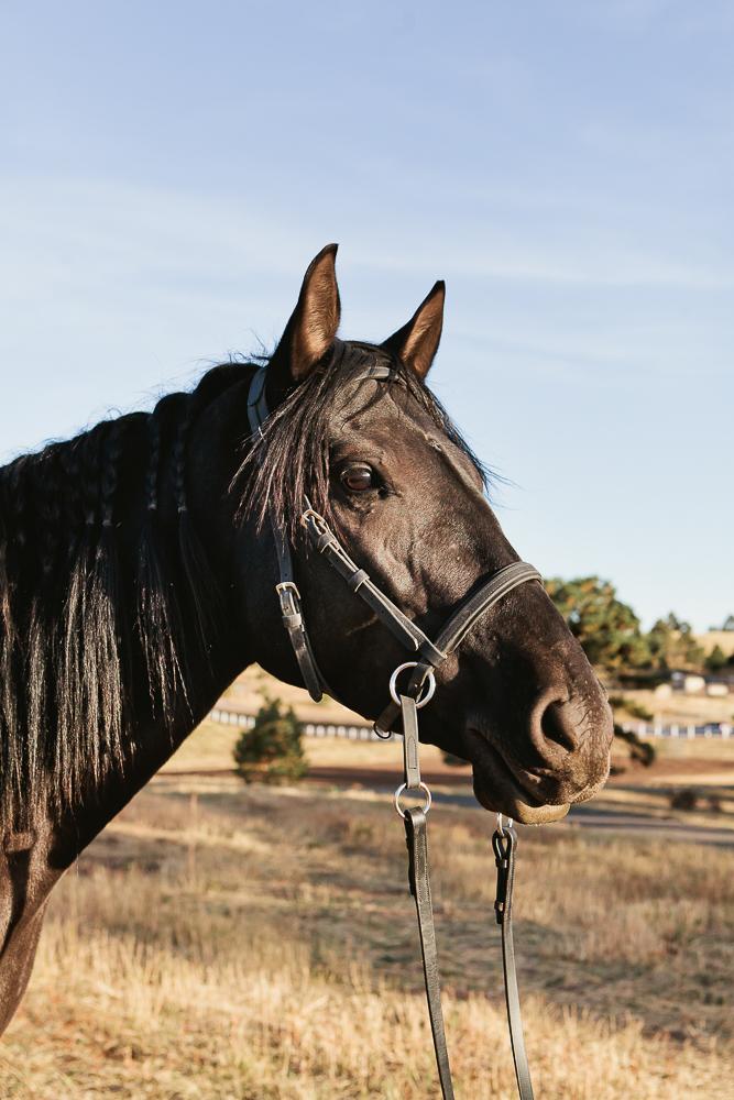 denver equine photography011.jpg
