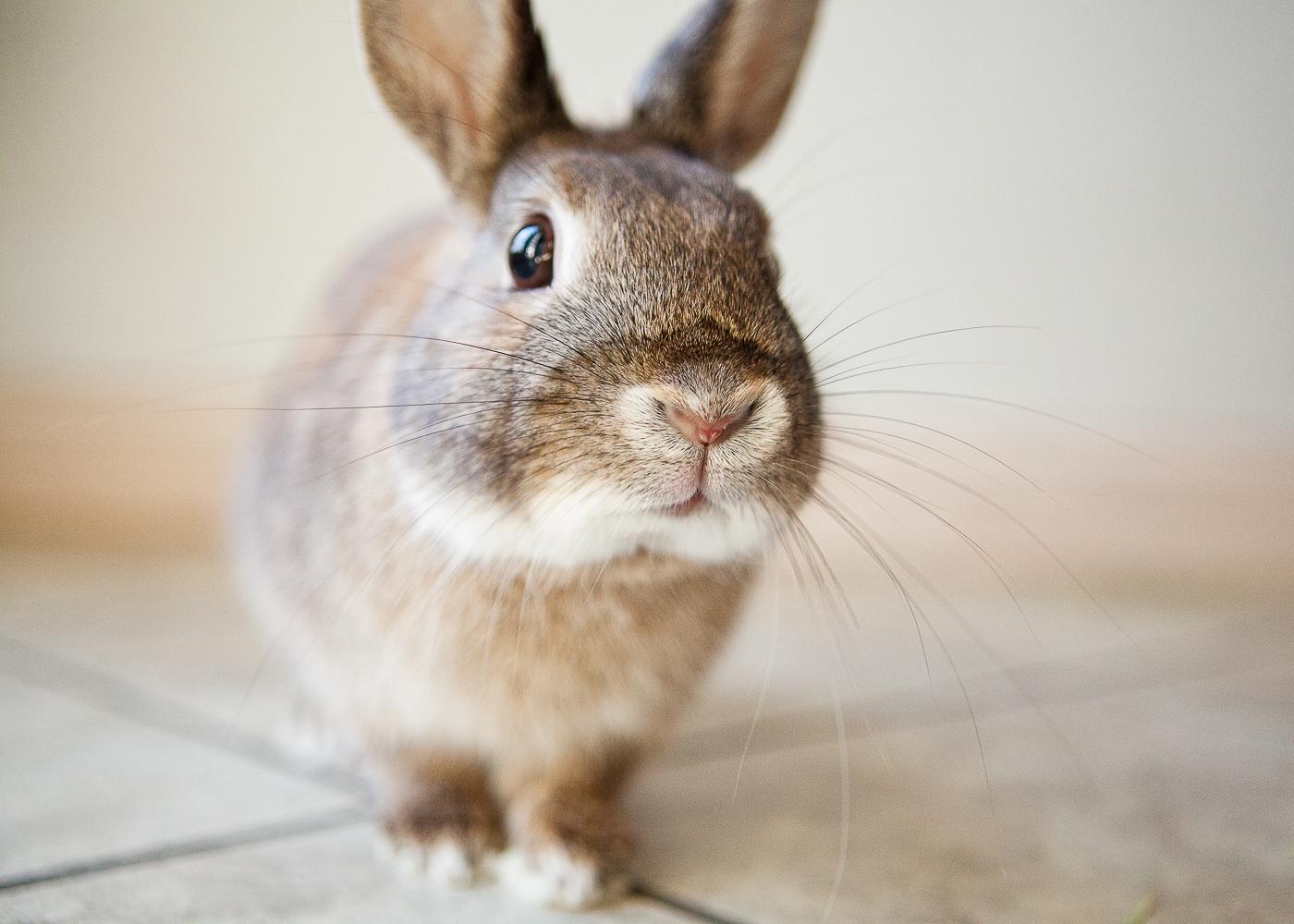 boulder house rabbit photos004.jpg
