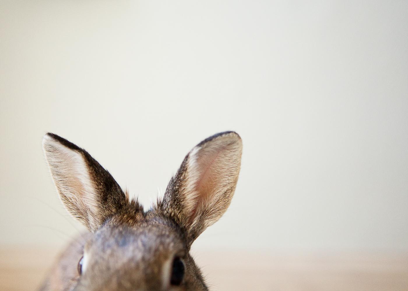 boulder house rabbit photos005.jpg