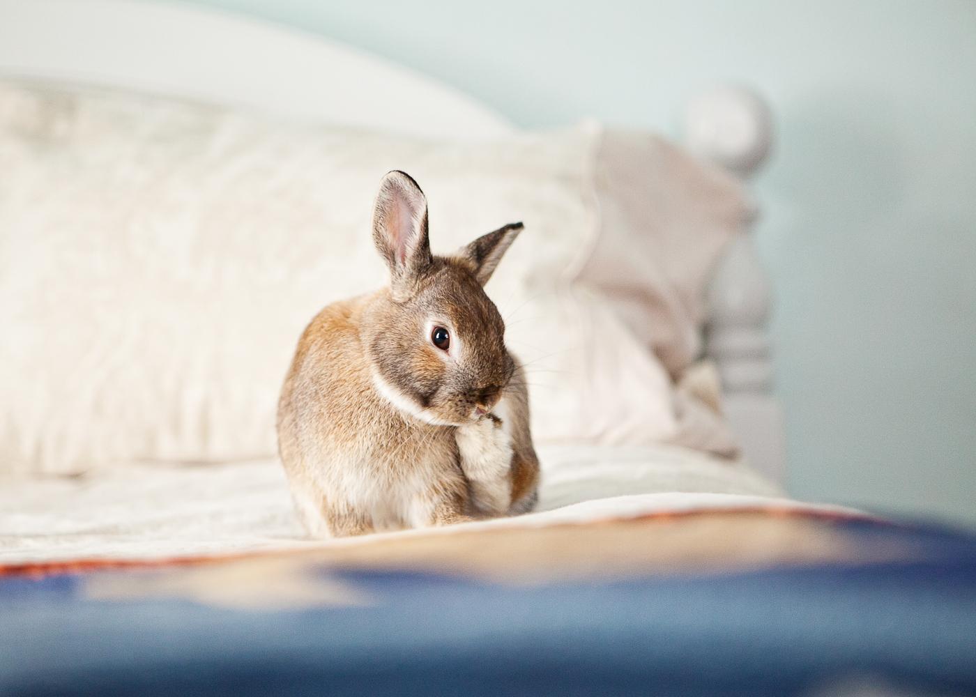 boulder house rabbit photos007.jpg