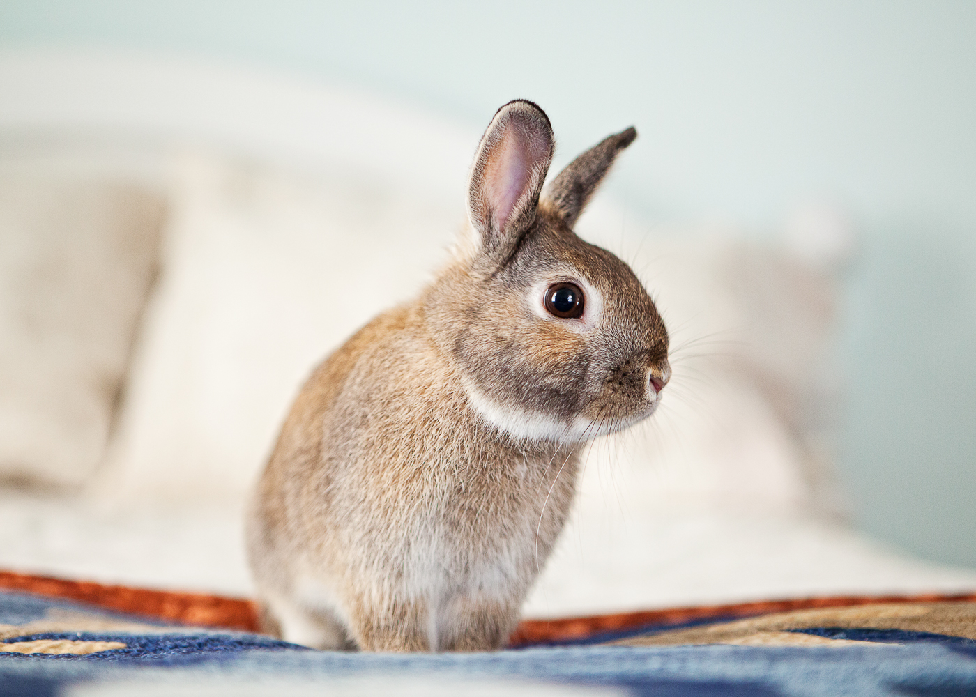 boulder house rabbit photos008.jpg