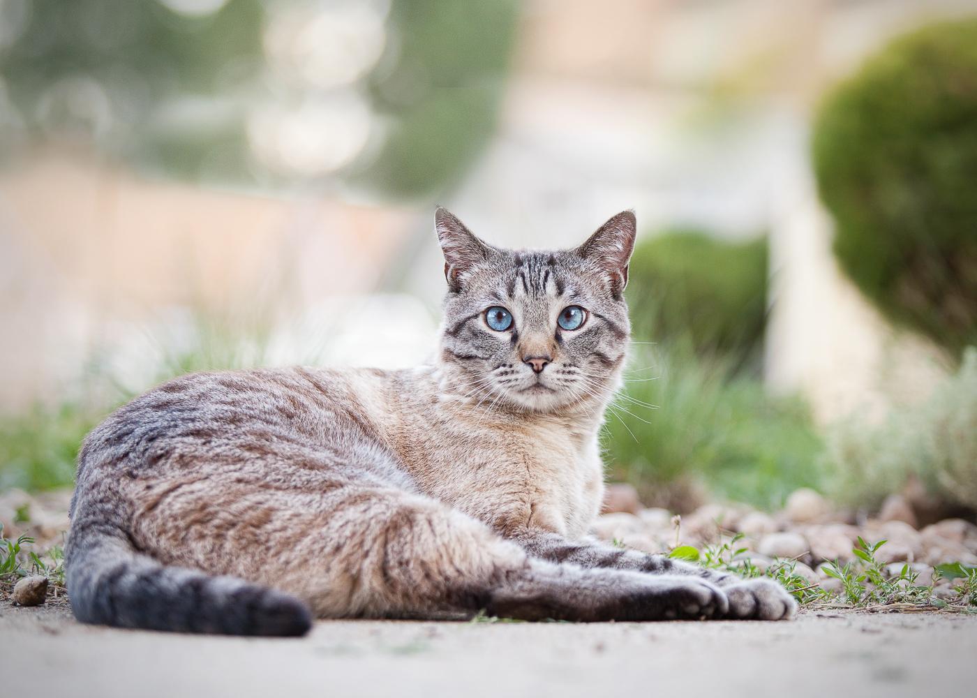 Boulder Denver cat photography_004.jpg