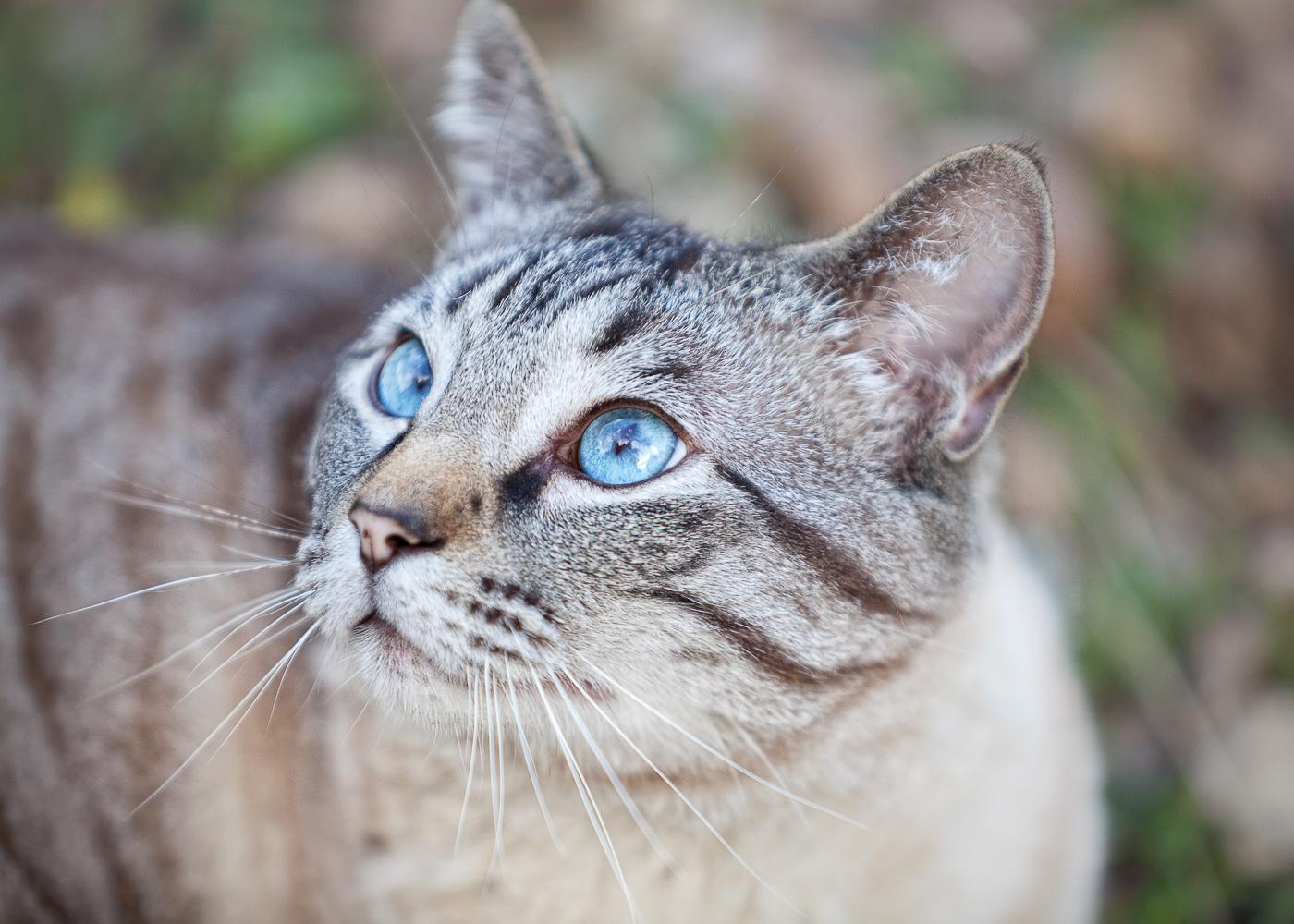 Boulder Denver cat photography_005.jpg