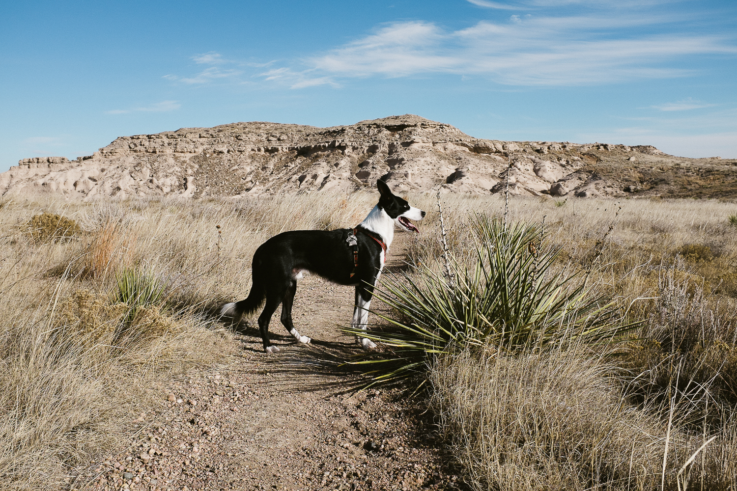 hiking with dogs at pawnee buttes colorado 006.jpg